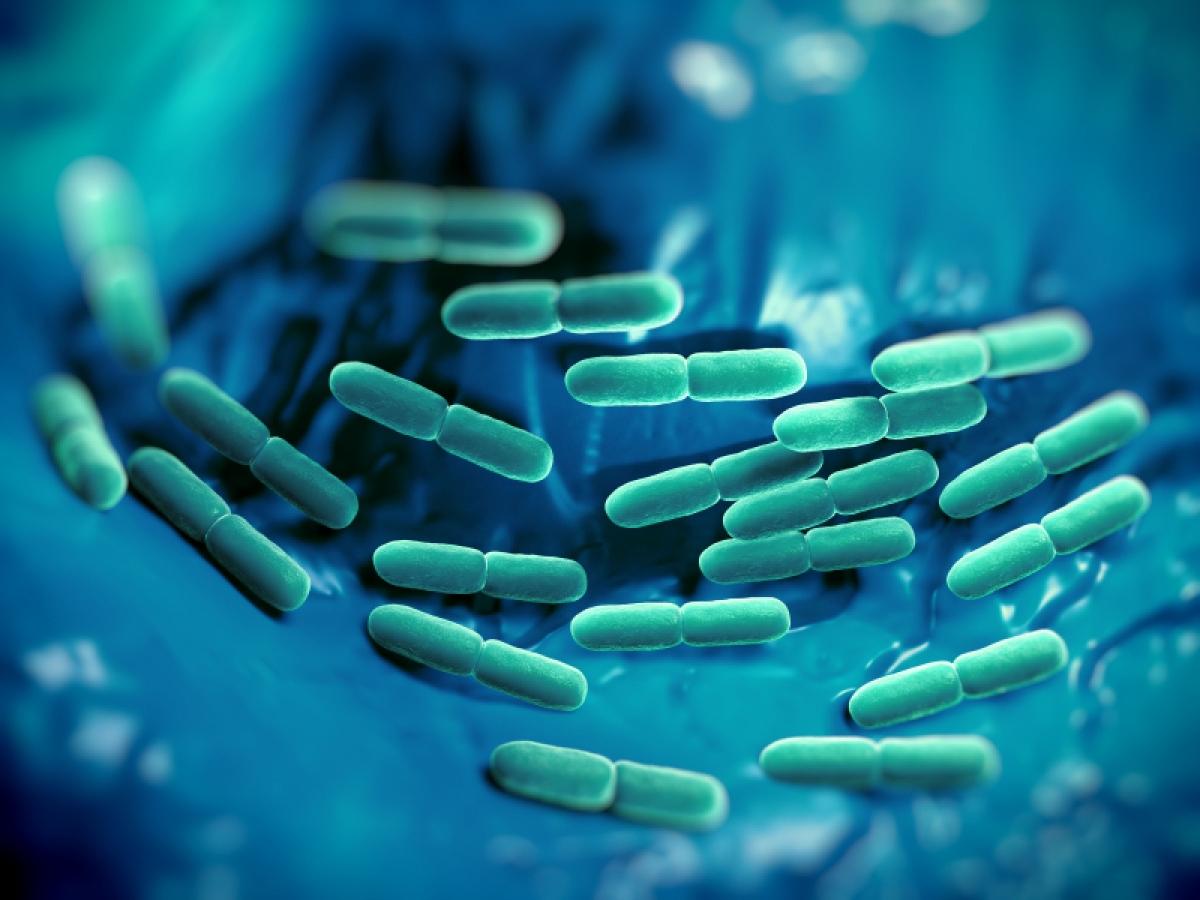 Έρευνα: Πώς τα μικρόβια στο έντερο επηρεάζουν το κεντρικό νευρικό σύστημα και πως να τα κρατήσετε υγιή
